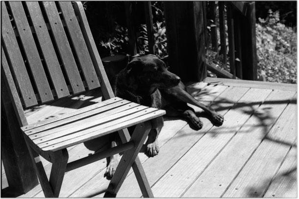 Dog resting on the sun