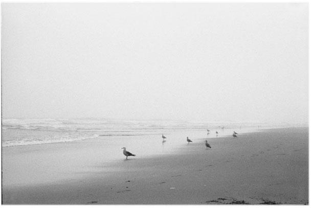 Misty Ocean Beach
