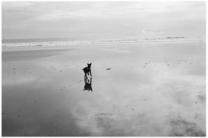 Dog running on the beach in Costa Rica