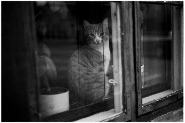 A cat looking out of a warm room in Denmark