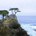 Lone Cypress, 17 mile drive