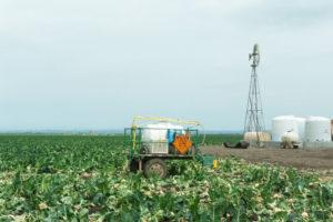 A vast lettuce field in Salinas