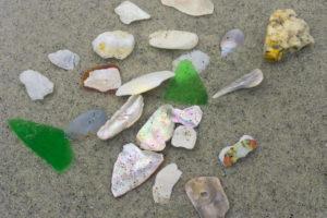 Seashells, carmel beach