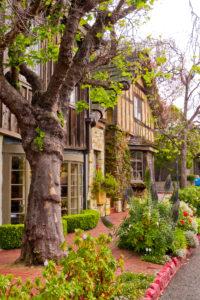 Carmel in harmony with green
