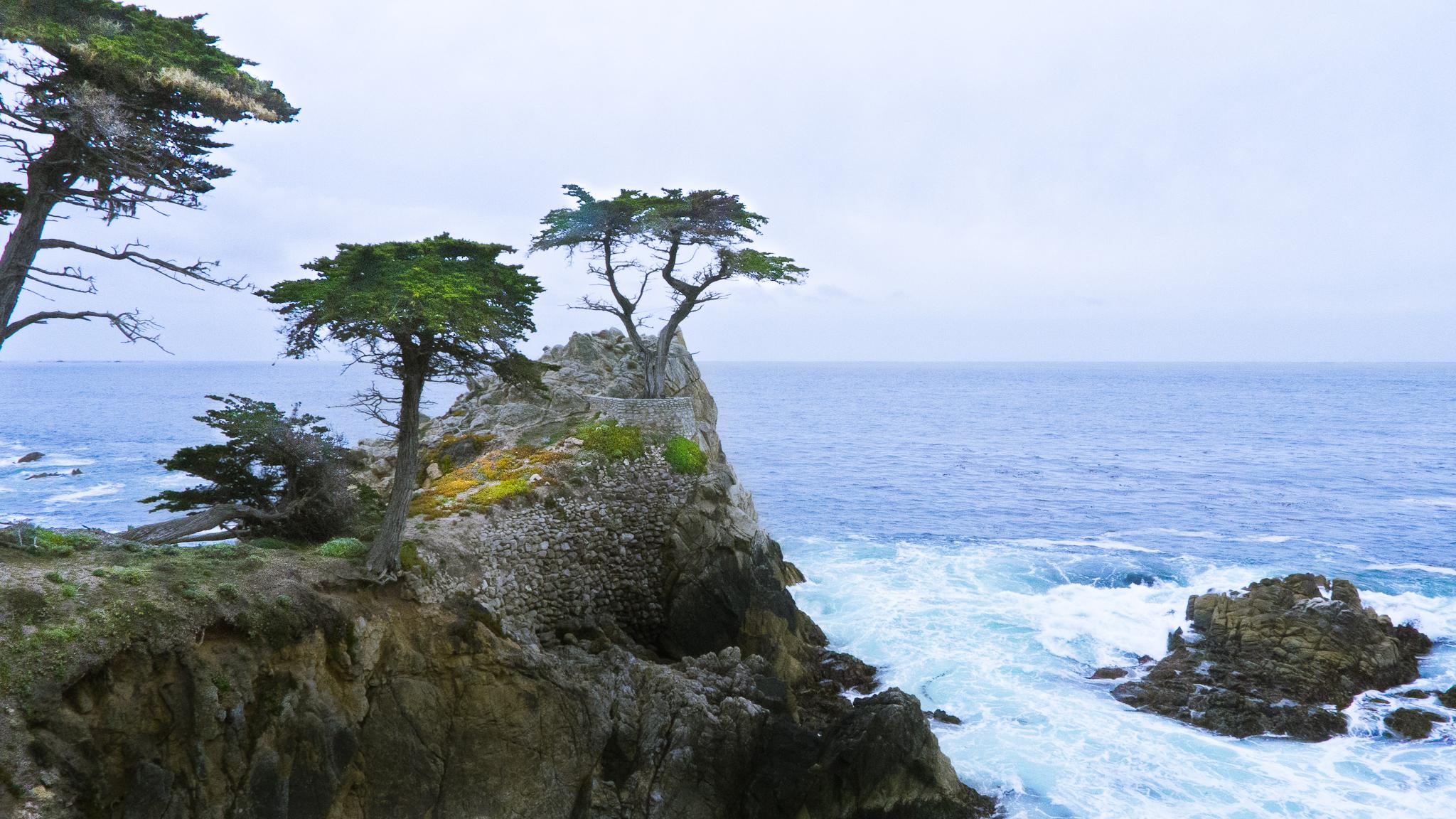 Lone Cypress, 17mile-drive