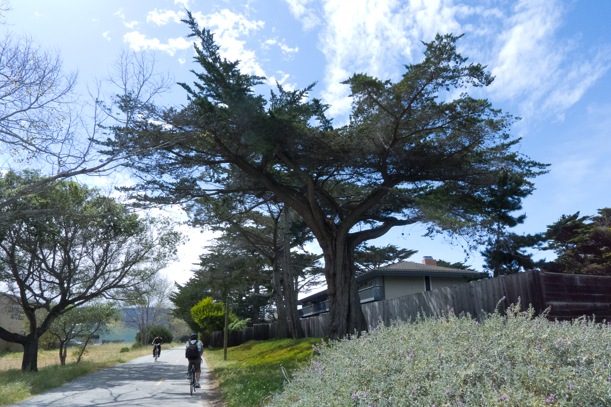Monterey Cycling Road