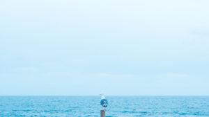 Seagull, sea and sky